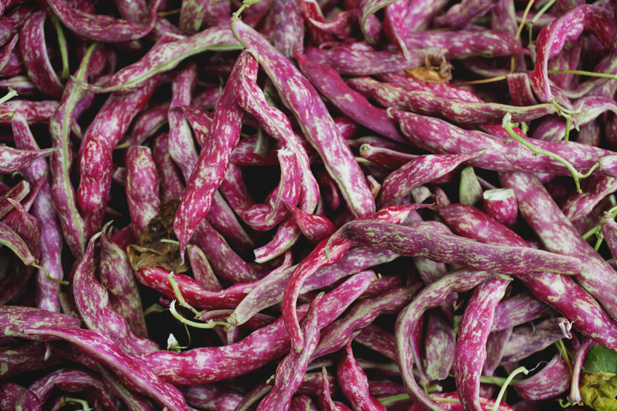 140809-09A LWR Cranberry Beans.jpg