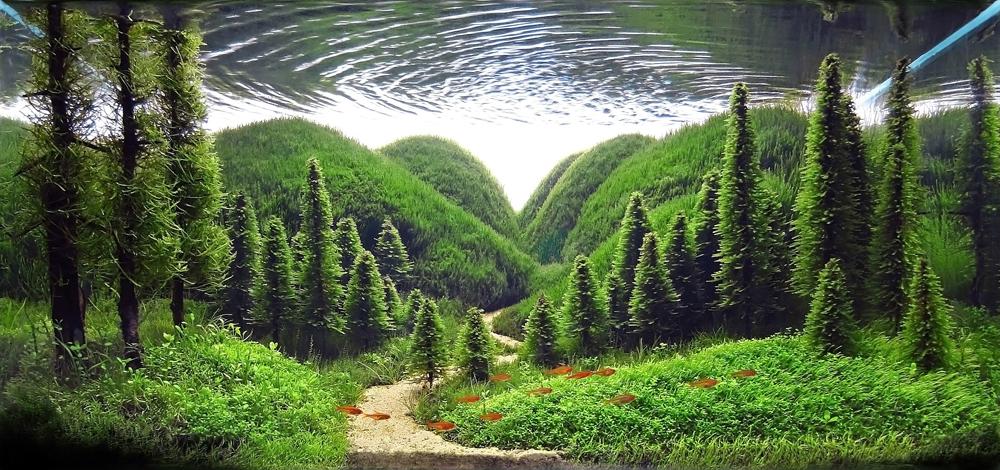 Whisper of the pines , Serkan Çetinkol. Turkey. 2013 IAPLC Top 27