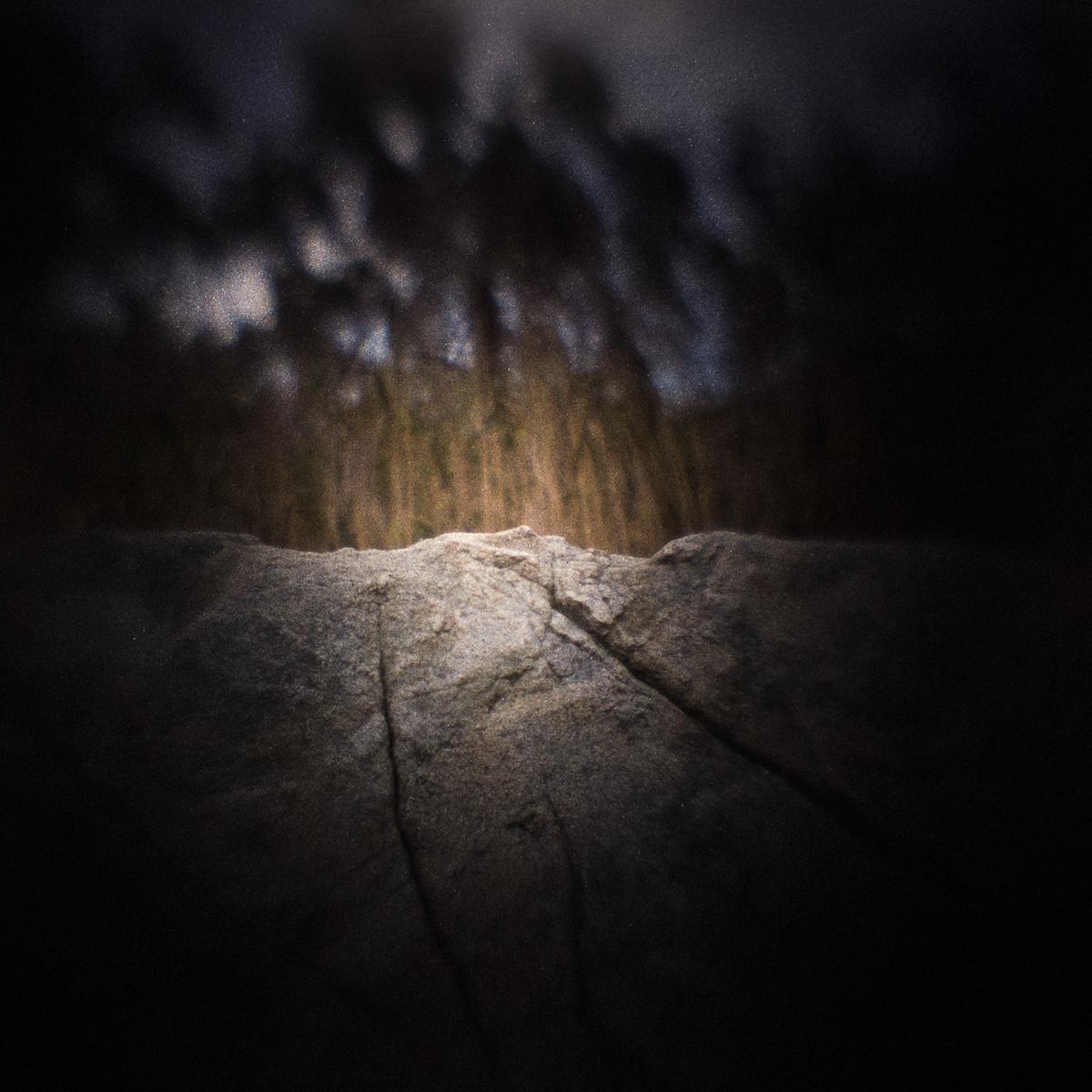 Fort Hill Phragmites, Eastham