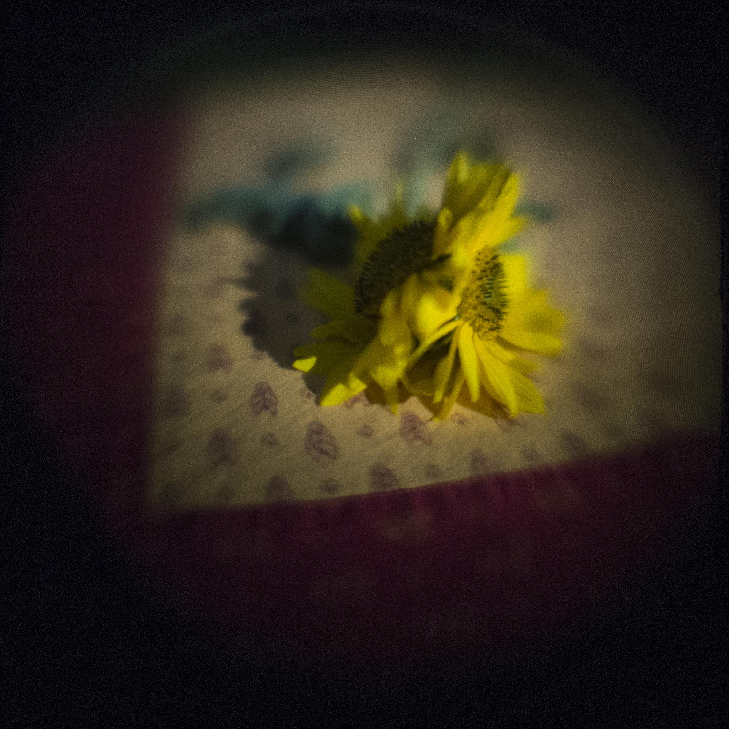 Double Headed Sunflower
