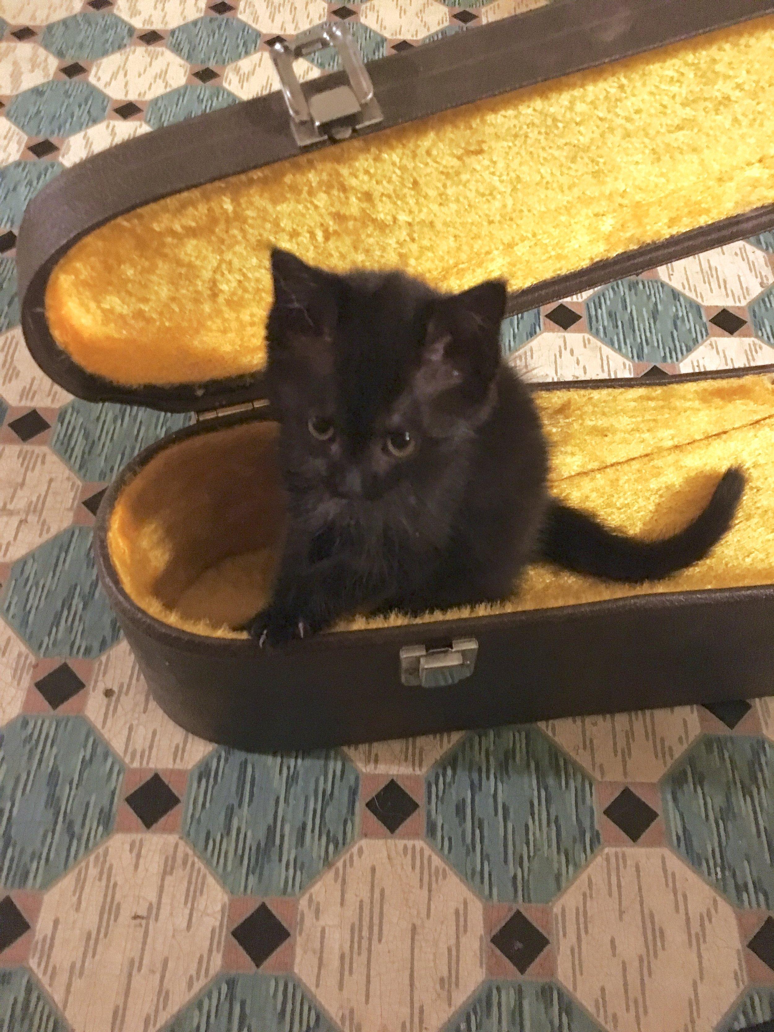 tiny_black_kitten_lily_dale.jpeg