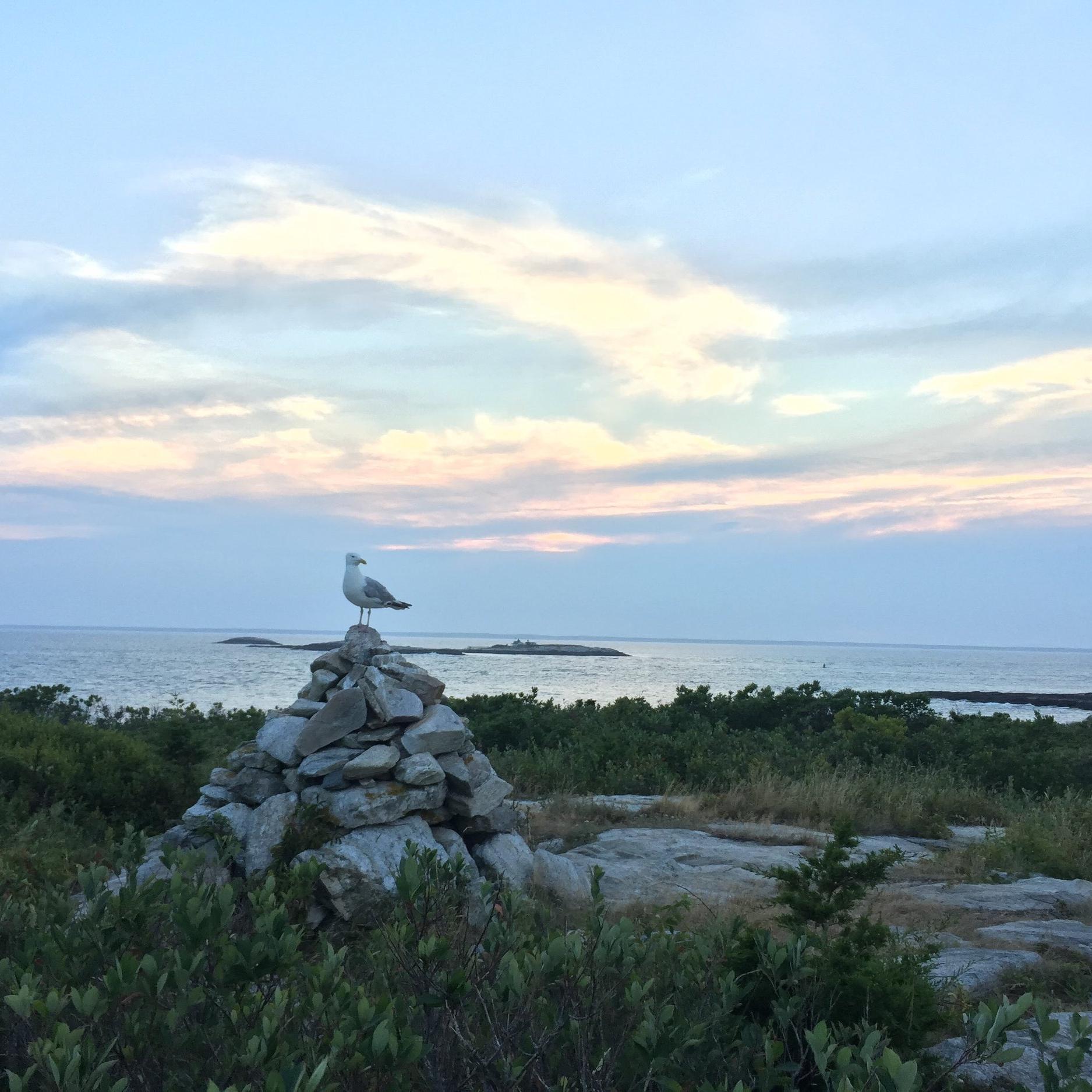 LOAS seagull.jpg