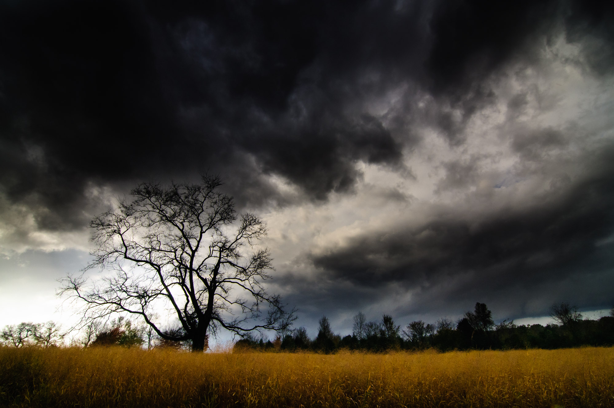 Thunderstorm and Oak