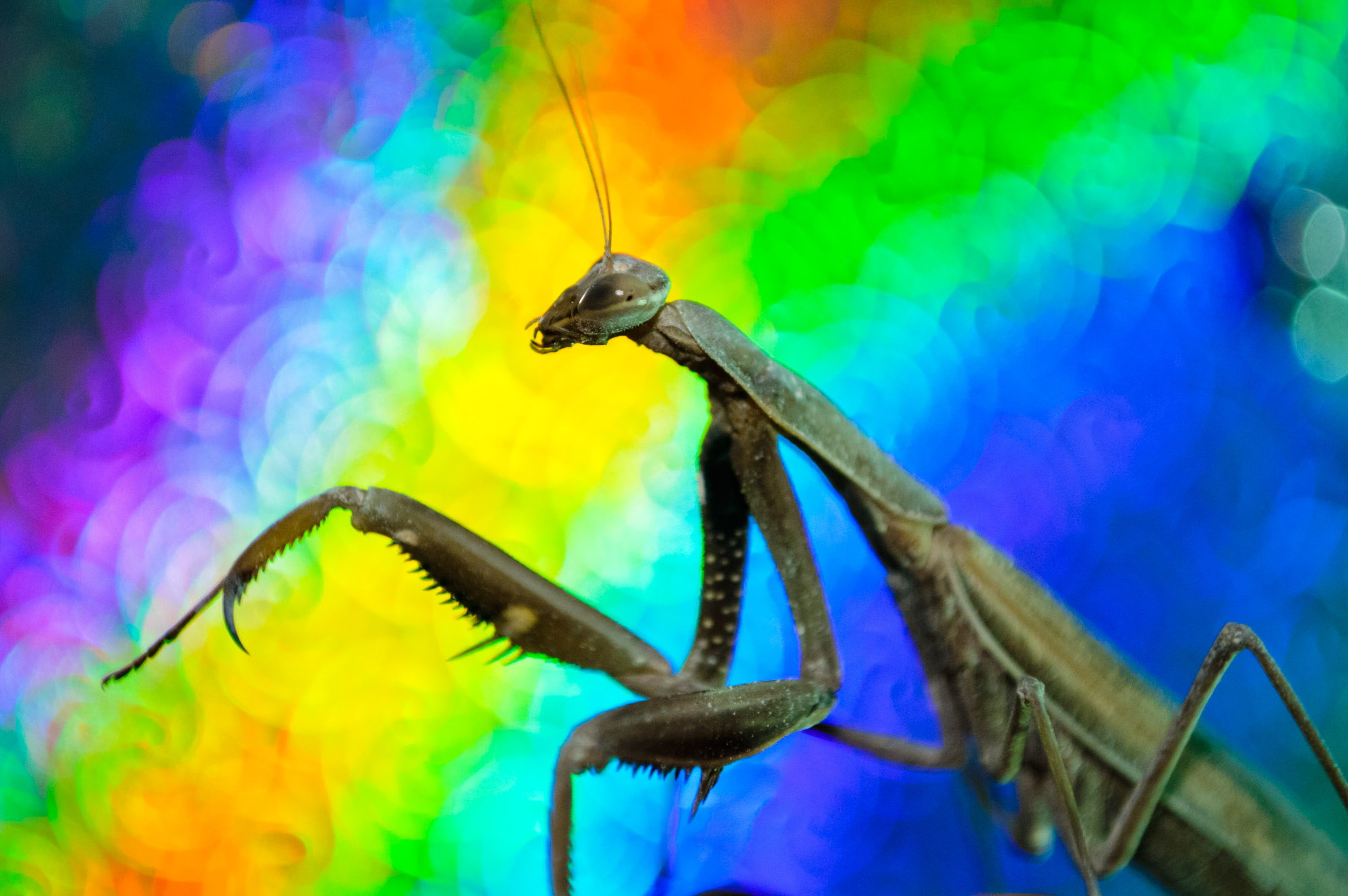 Alien Companion