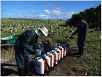 Figure 4. Herbicide treatments are applied with backpack sprayers.