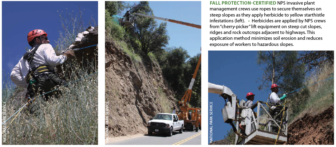 """Fall protection-certified  NPS invasive plant management crews use ropes to secure themselves on steep slopes as they apply herbicide to yellow starthistle infestations (left). • Herbicides are applied by NPS crews from """"cherry-picker"""" lift equipment on steep cut slopes, ridges and rock outcrops adjacent to highways. This application method minimizes soil erosion and reduces exposure of workers to hazardous slopes."""