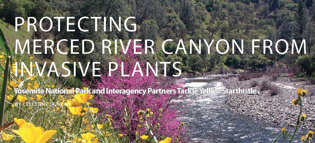 The Merced River  begins in the high country of Yosemite National Park and flows through rugged mountains and foothills forming a canyon renowned for its  spring wildflower displays , wildlife and recreation opportunities. (Photo by National Park Service)