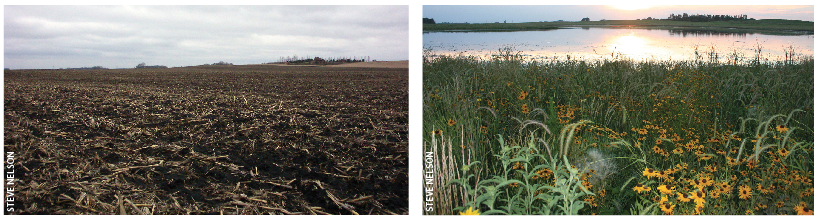 BEFORE AND AFTER.  A 140-acre wetland restoration project before (left) and two years after (right) restoration in Renville County, Minnesota.