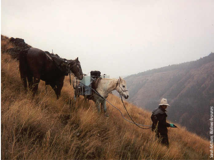 Skip Royes uses a horsepack sprayer to apply herbicides for noxious weed control in the rugged landscape of the Wallowa Canyonlands Partnership area (Wildcat Creek).