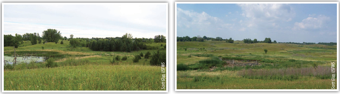 Photos taken before (left) and after woody species removal at Weber Waterfowl Production Area (WPA)