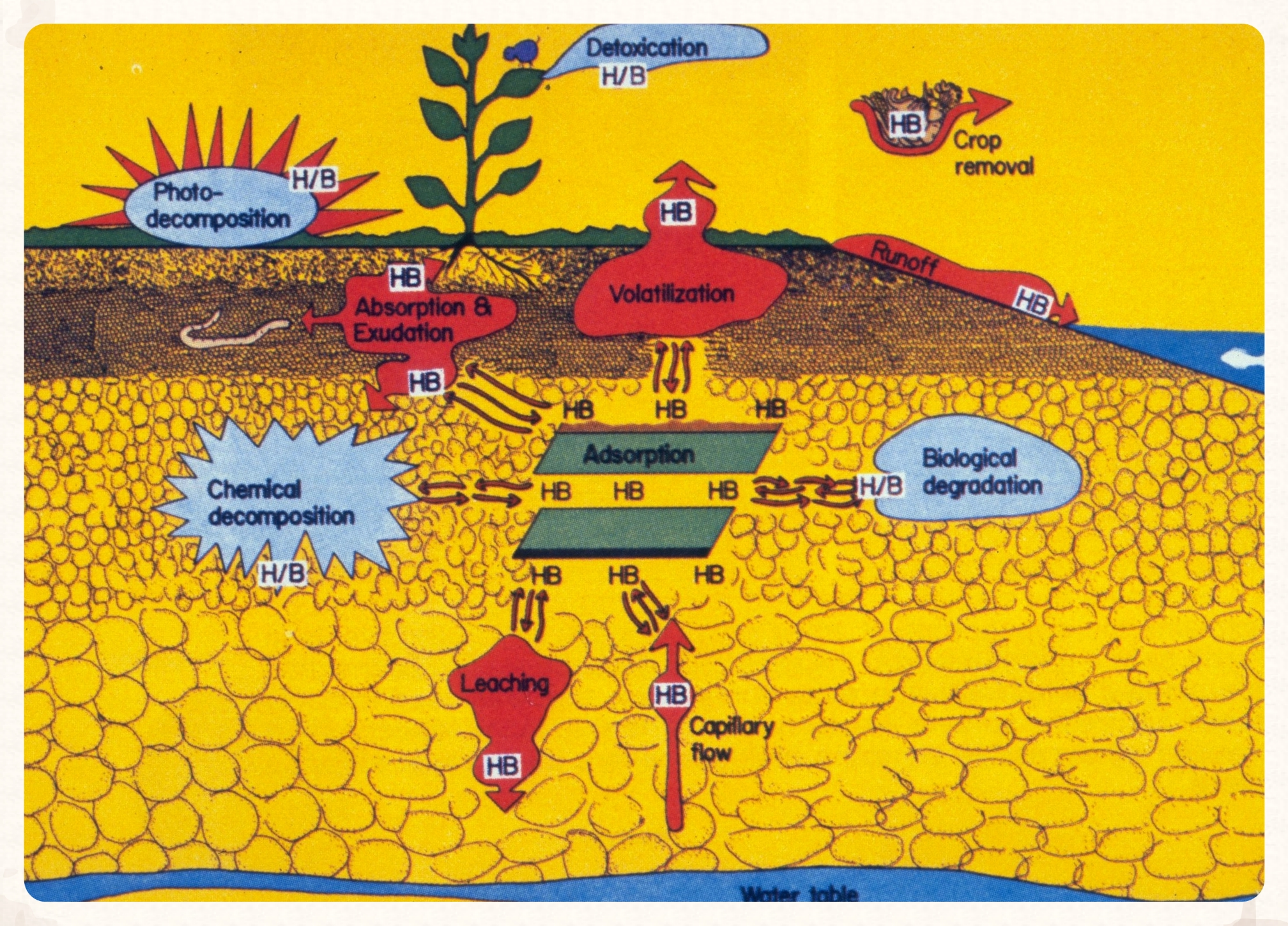 Figure 1.  Herbicides dissipate in the environment through absorption and detoxification by plants, volatilization, photodecomposition, and other degradation and transport processes. HB denotes herbicide.  (USDA Forest Service - Region 8 - Southern Archive, USDA Forest Service, Bugwood.org)