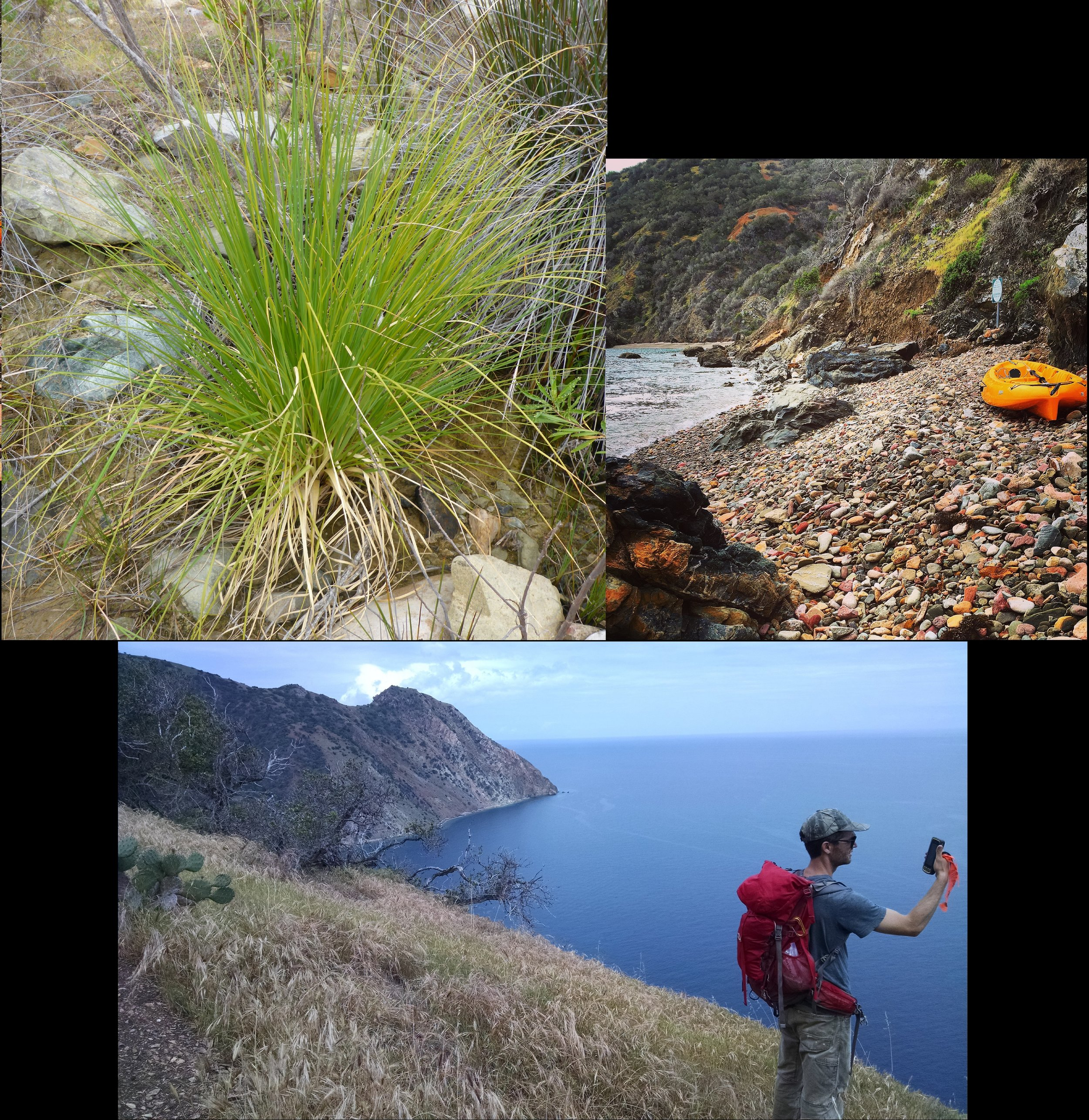 On Catalina Island, some of our target plant populations are not easily accessible from the road.