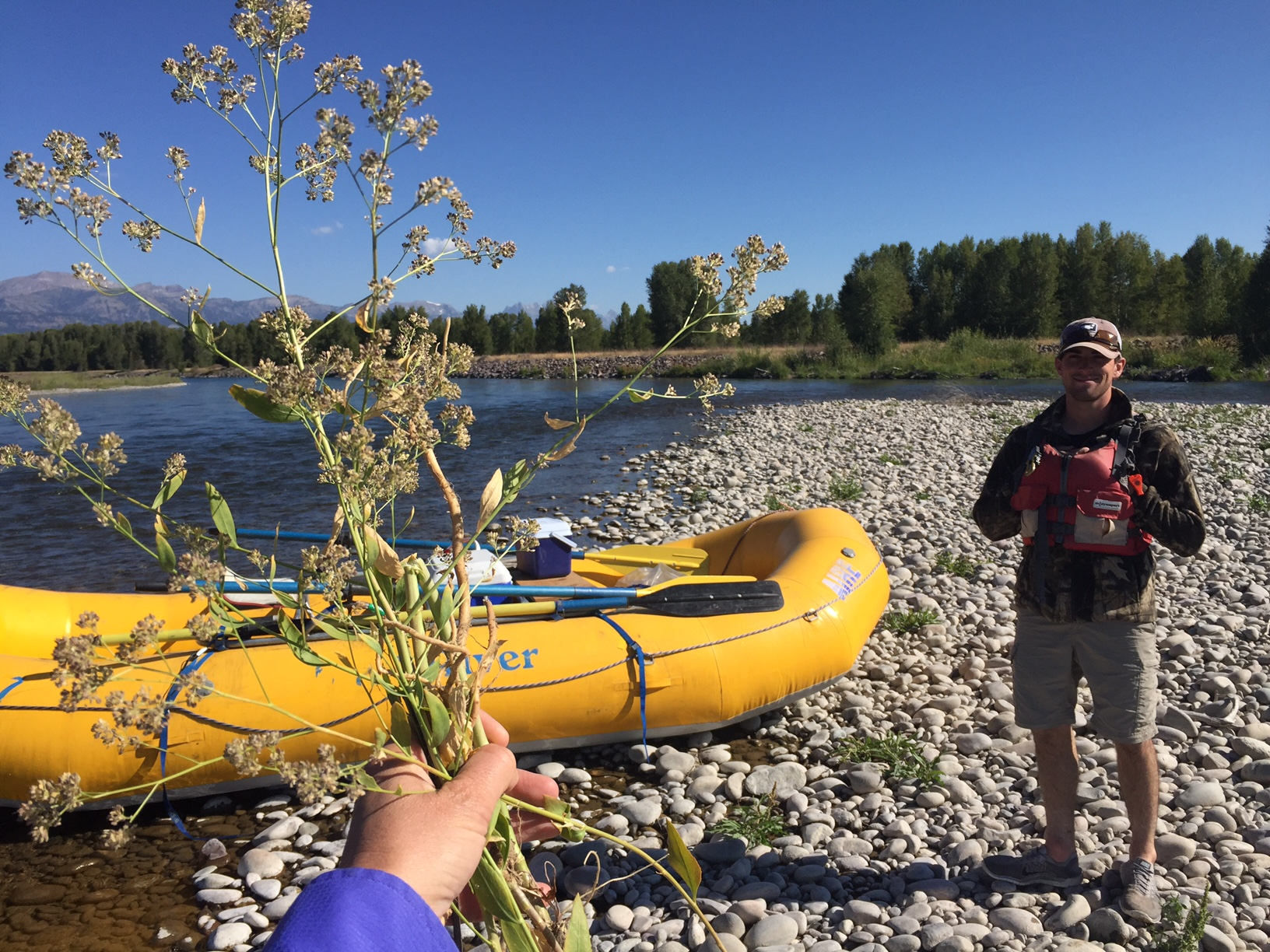 Early Detection Rapid Response for Perennial pepperweed on the Snake River