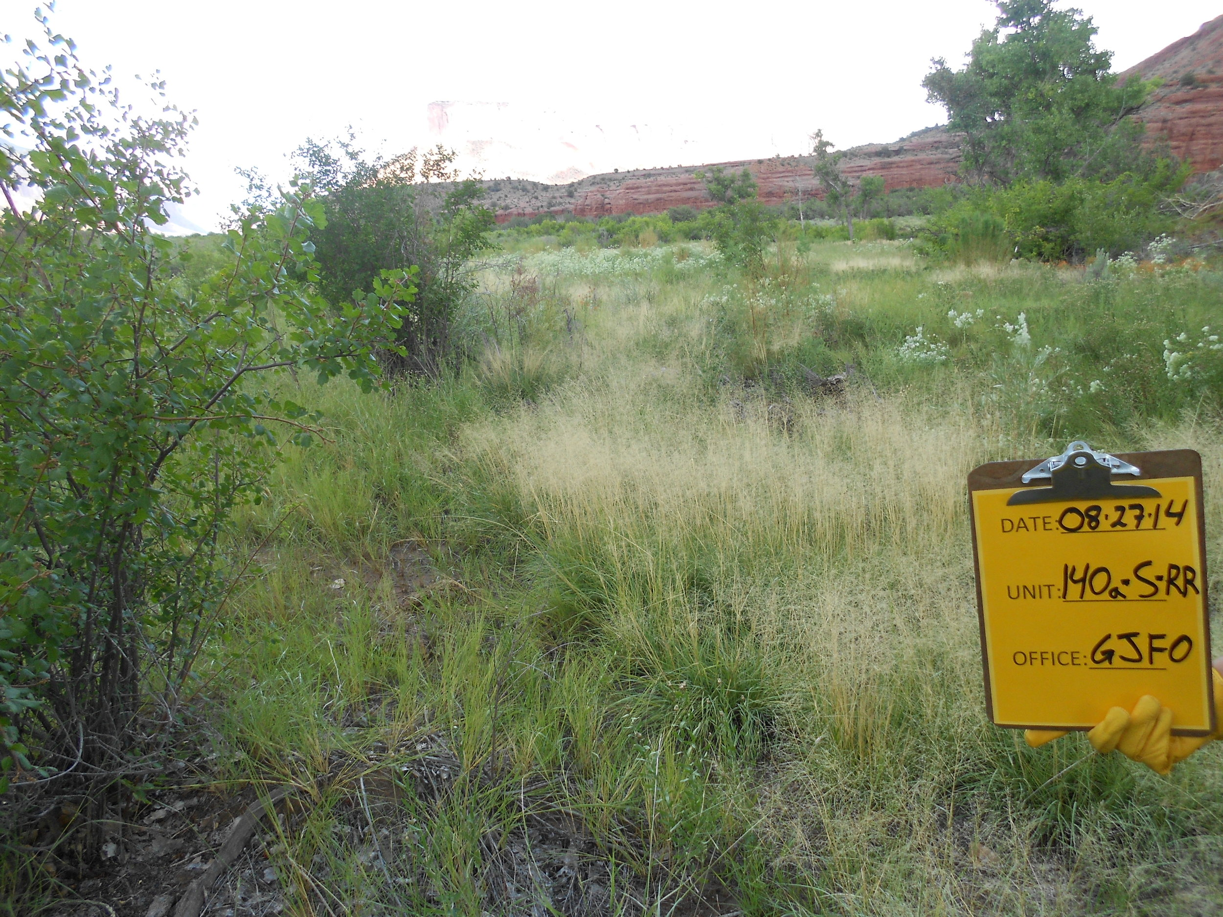 ... and following removal and regeneration of desirable native vegetation.
