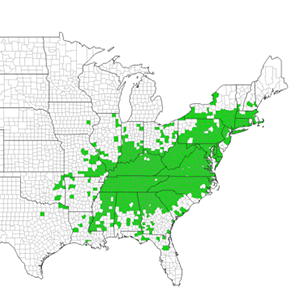 Figure 2. COUNTY DISTRIBUTION OF JAPANESE STILTGRASS IN THE EASTERN UNITED STATES ( EDDMAPS 2019 .
