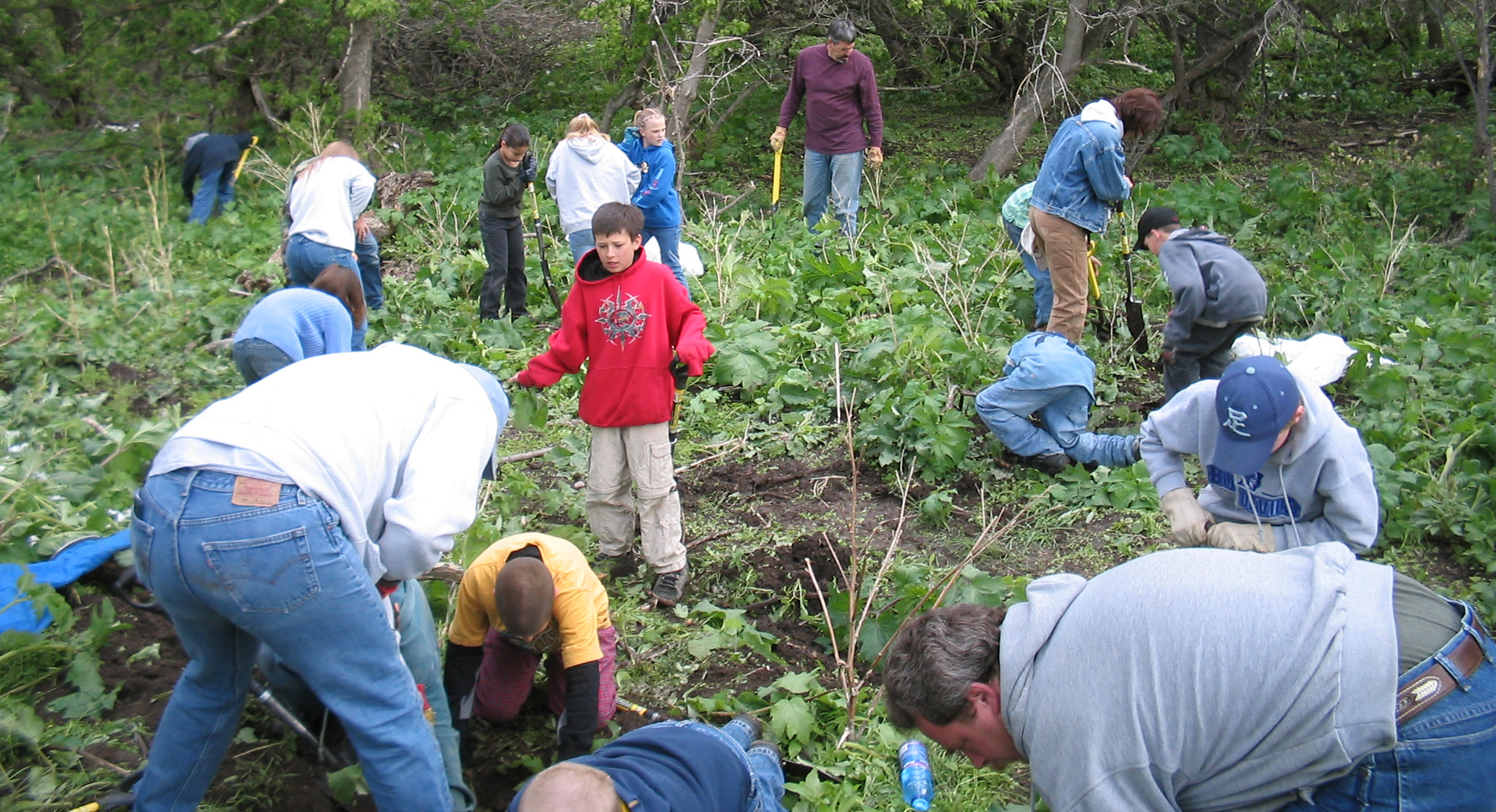 "Fig. 7:  The annual ""Burdock Dig"" with fifth-graders from Sunnyside School includes more than 180 students and parents each year.  Photo by Terry Turner."