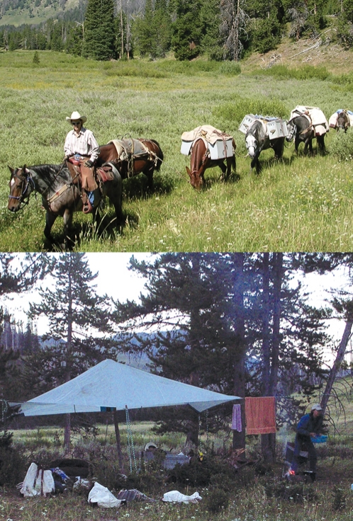 FIGURE 1: Multi-day trips into the Teton and Gros Ventre Wilderness are needed to monitor and treat invasive plants.