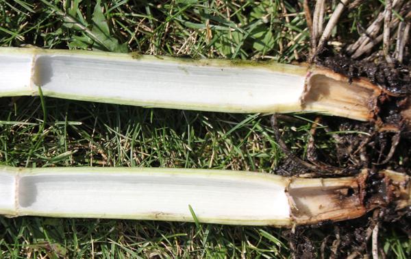Hollow stems