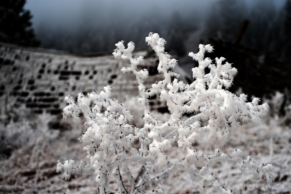 hoar_frost_old_barn--5.jpg