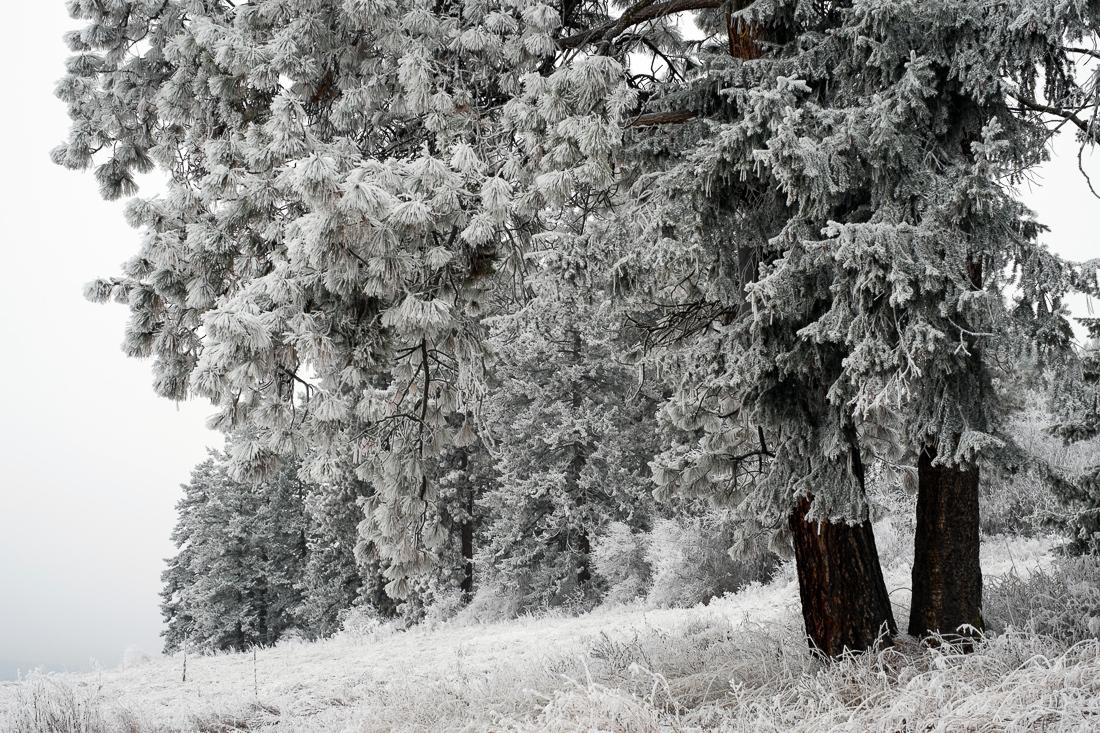 hoar_frost_old_barn--12.jpg