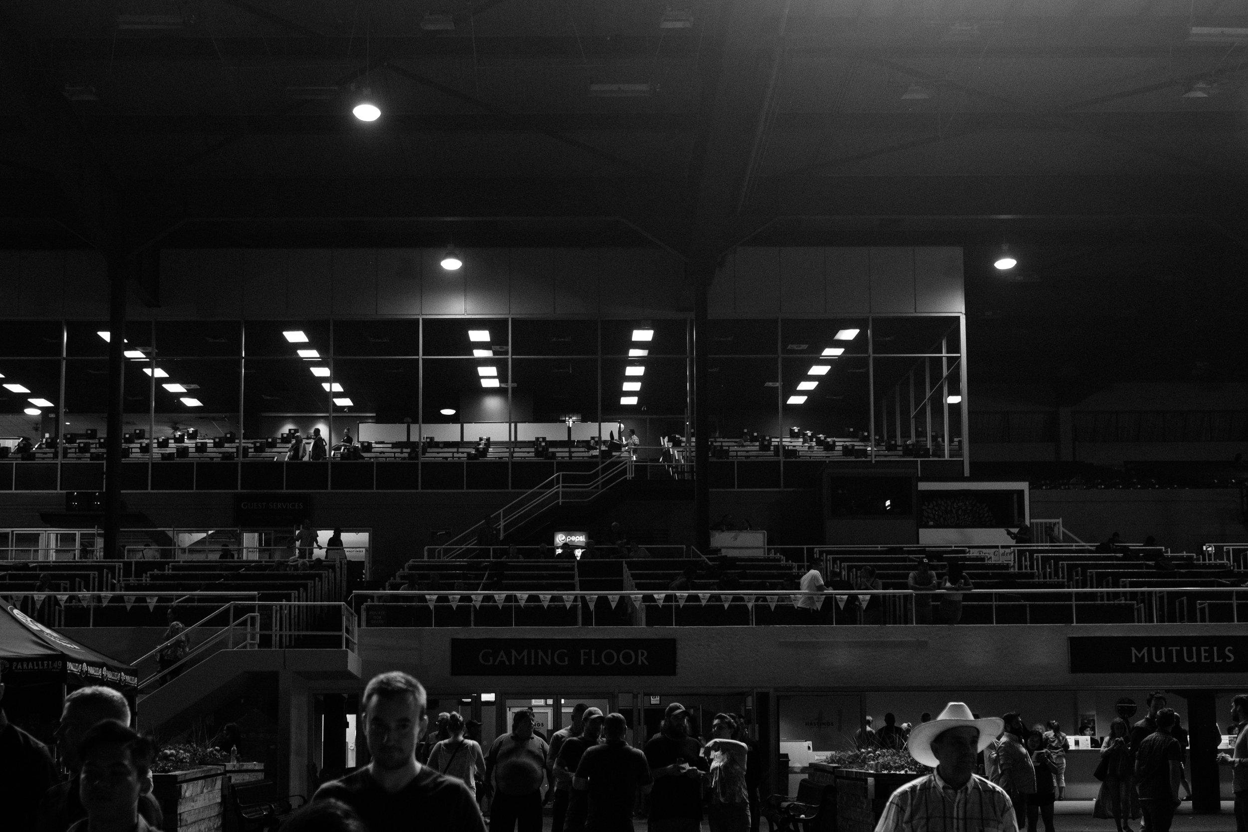 hastings_racecourse-0811.jpg