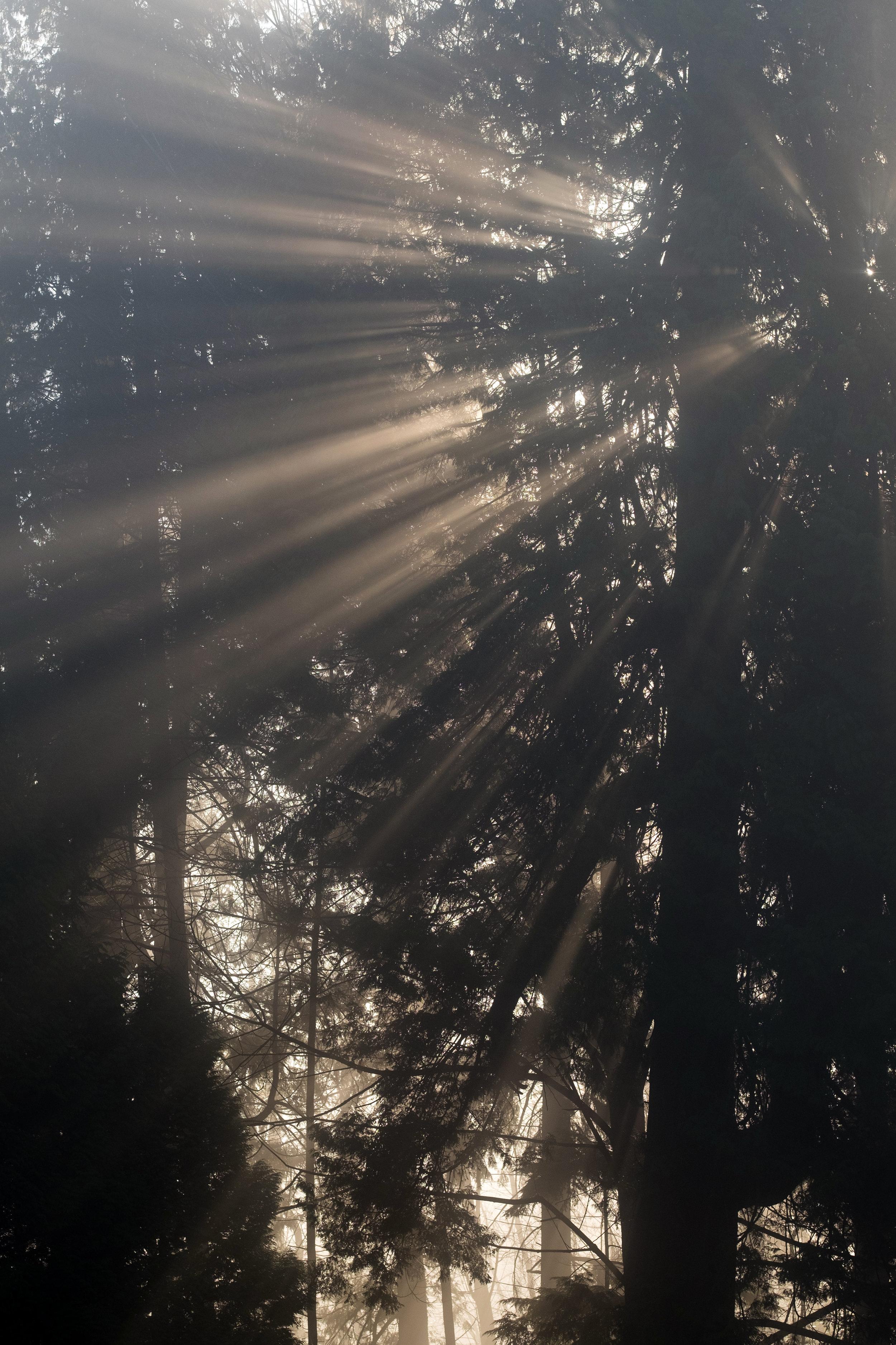 sun beams stanley park vancouver