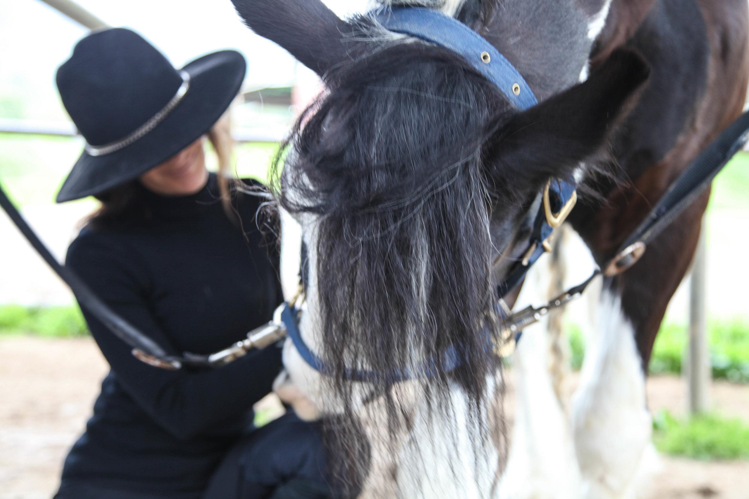 horsepet.jpg