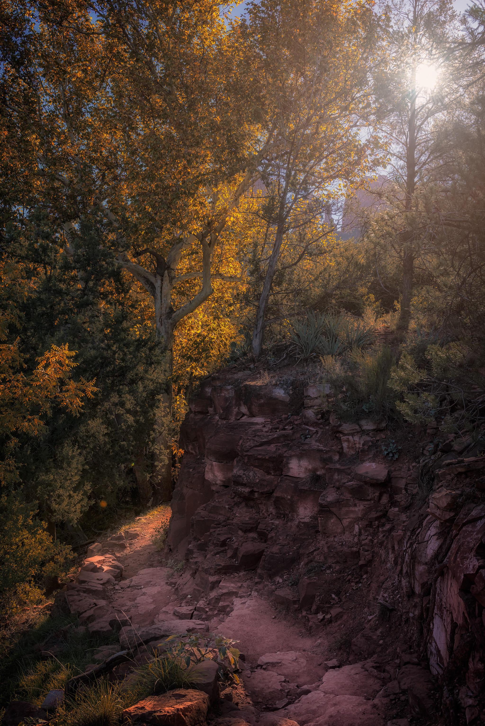 Phoenix Photographer Nathan Brummer Photography DSC_6799.jpg
