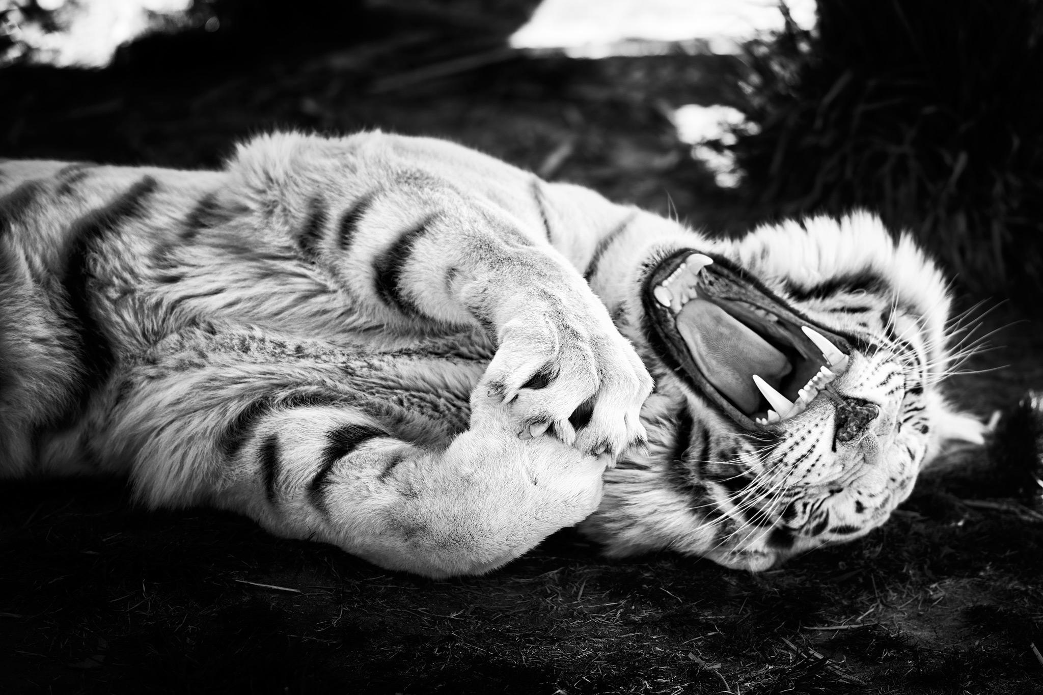 Phoenix Photographer Nathan Brummer Photography Zoo5