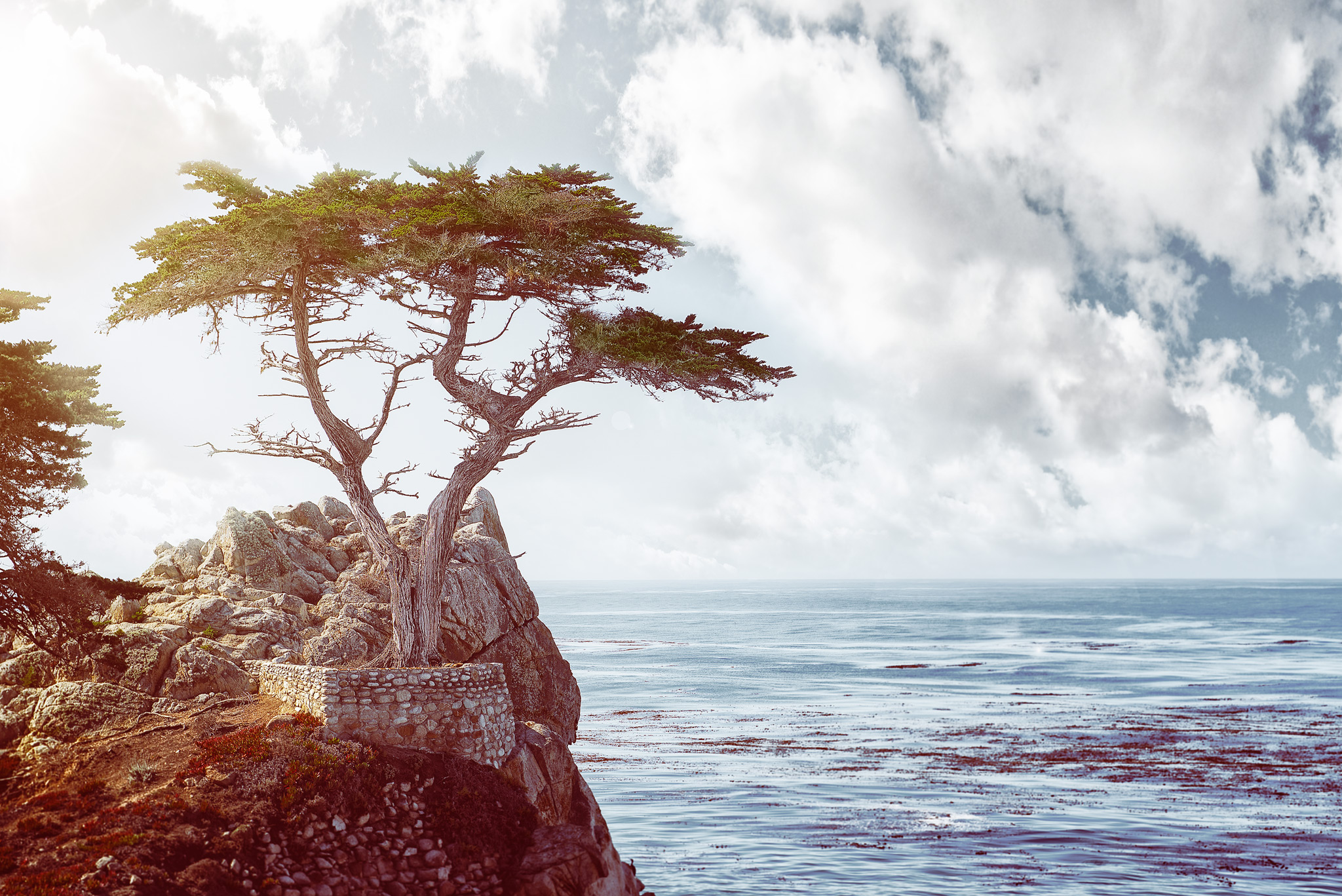 Lone-Cypress.jpg