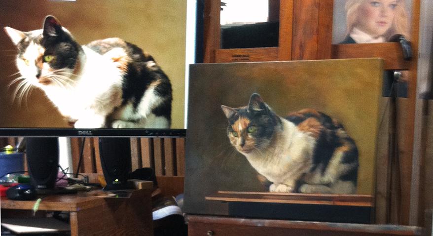set up cat.jpg