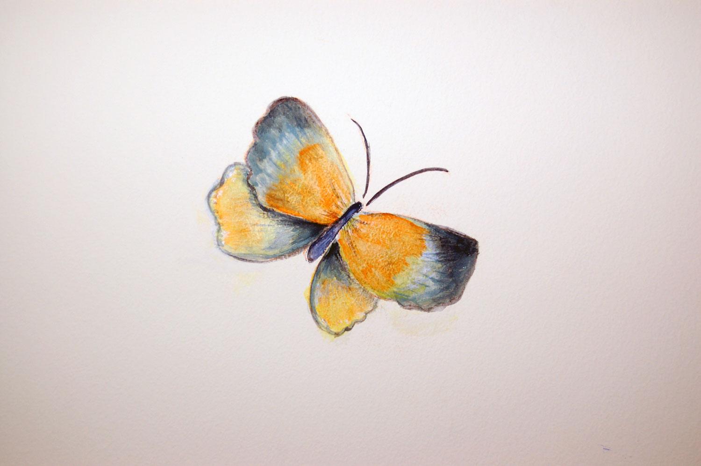 mural-butterfly-orange-andgrey.jpg