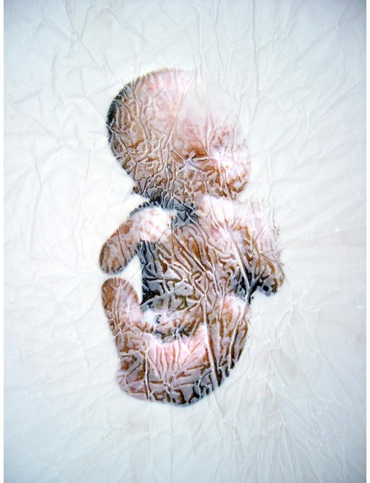'Study for JesusFoetus'. Acetone print on tracing paper. 1997