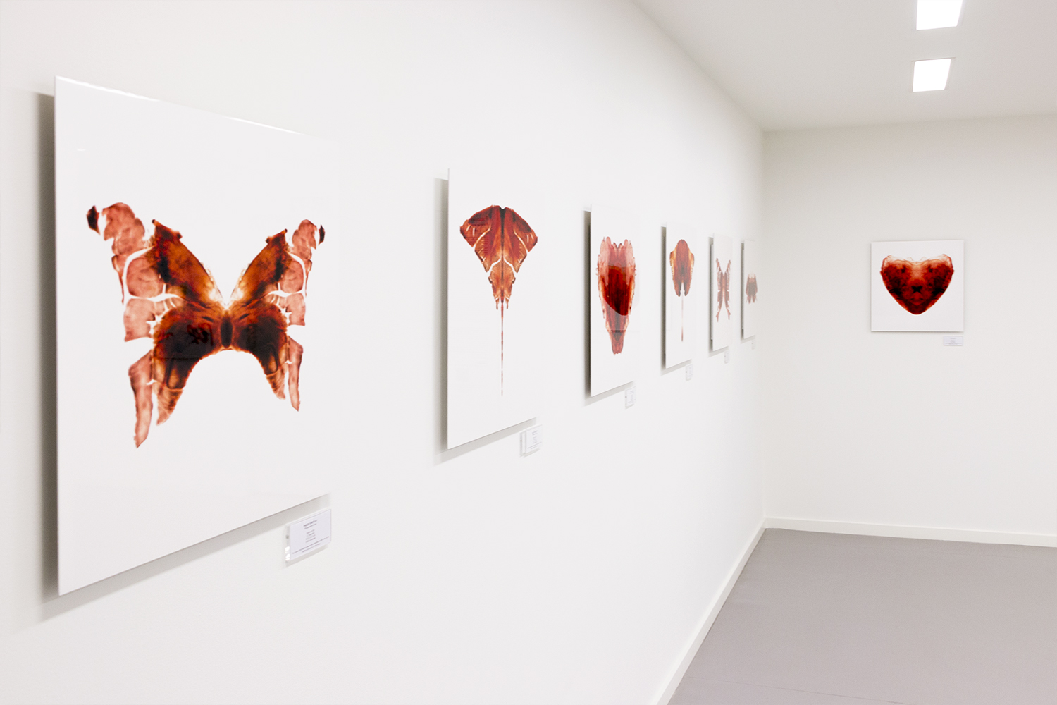 Saatchi Gallery, London  The Aligera Series 1. Lambs Heart tissue compositions. Limited edition C-Type prints.