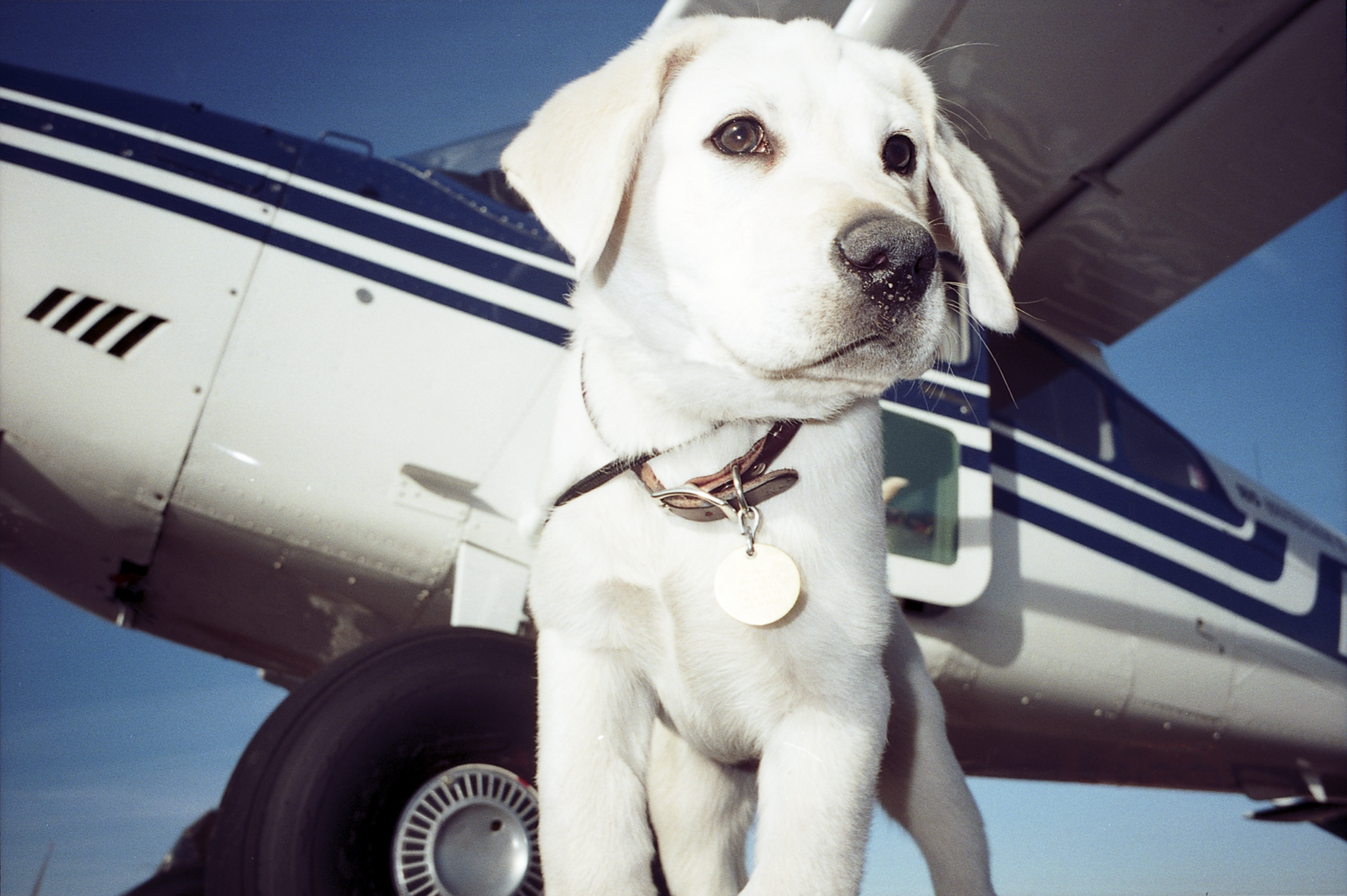 At four months of age, Orville was able to keep the wings level on a Cessna.
