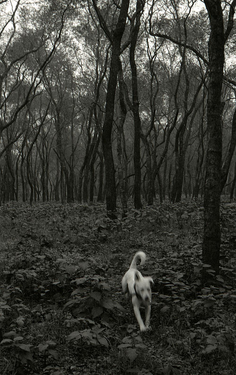 Orville running through the Queen's Forest, Kathmandu.