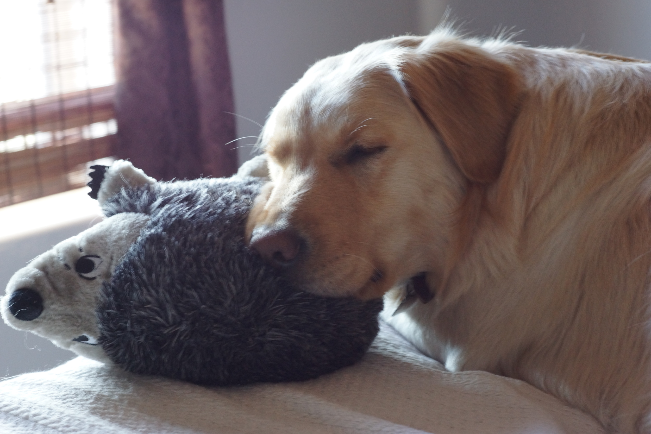 Rooki and the bear