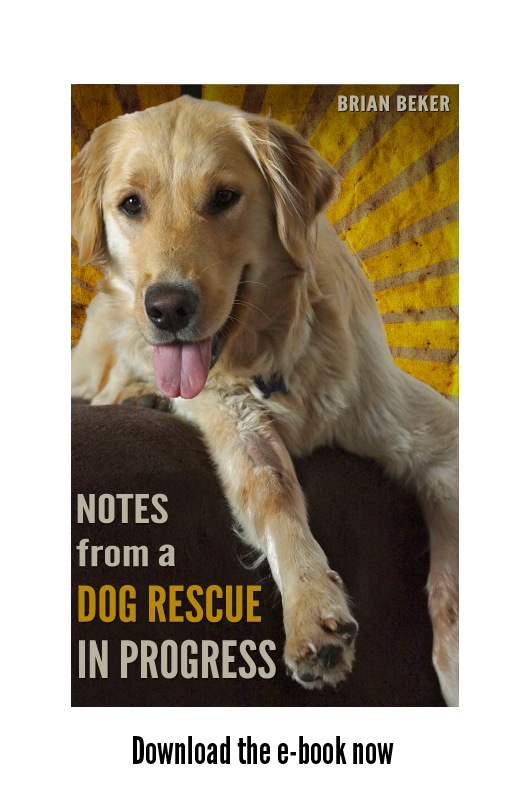 Three years in the top ten of all dog categories on Amazon and a #1 best seller. Click on the picture to order from Amazon. Available in  paperback  or ebook. Audiobook coming soon.