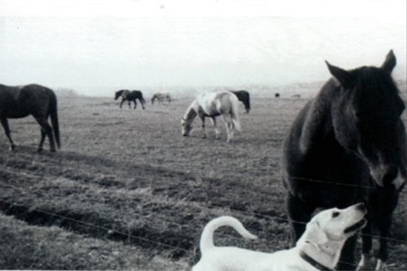 Friend to all animals. Orville used to wait for this horse to run a mile to come see him every day.