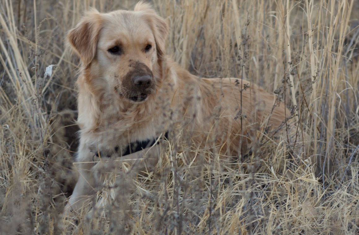 Roo doing her Elsa from Born Free imitation in the tall grass.