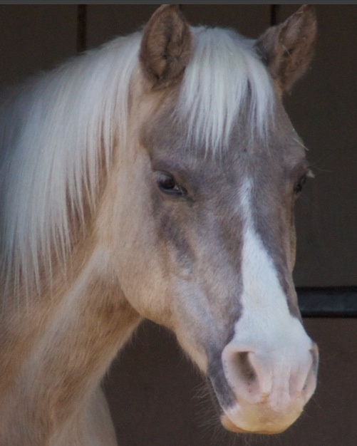 Here is a horsie