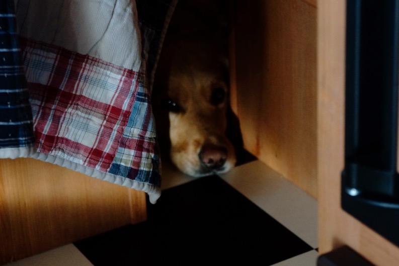 A preferred hiding place.