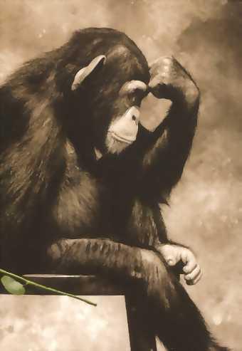 monkey_thinker_3-s340x493-114784.jpg