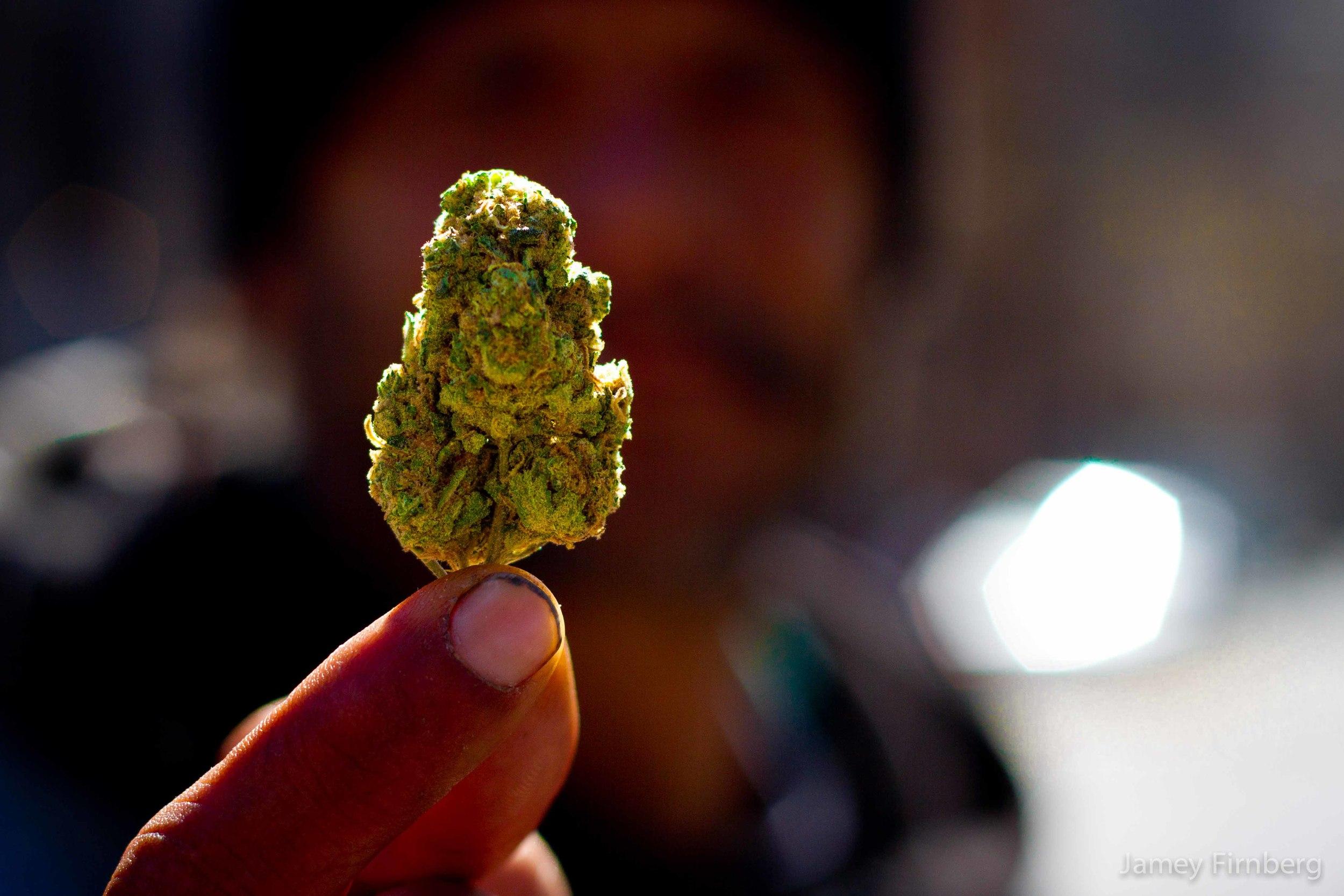 Weed Men-2.jpg