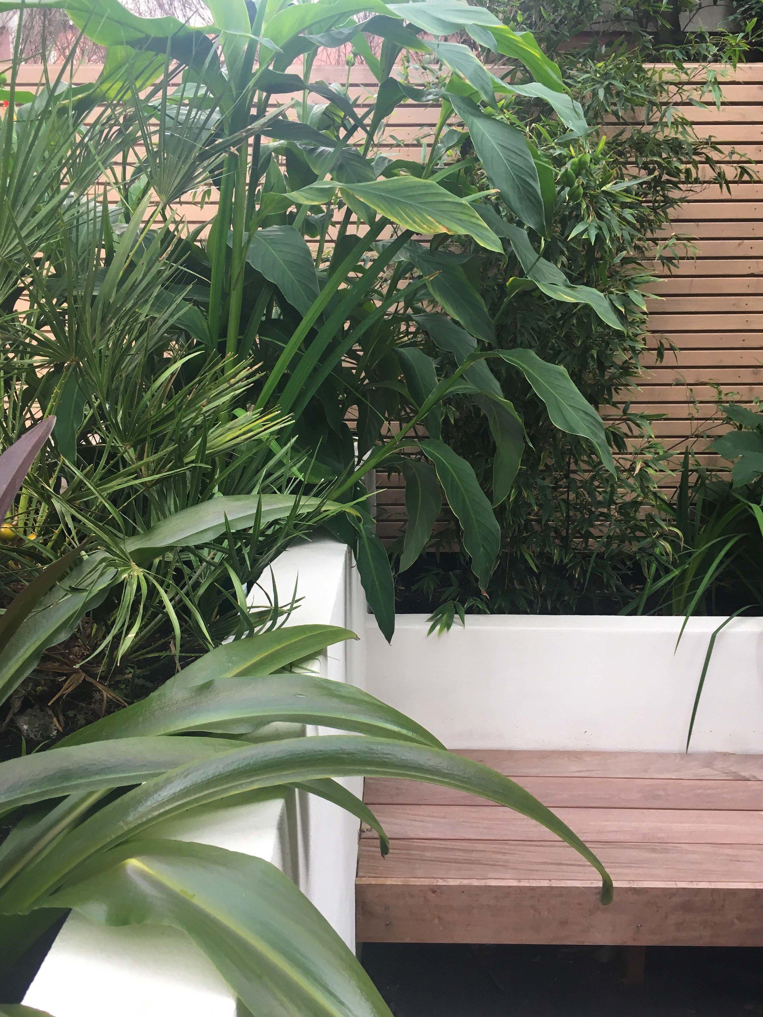 Tuinontwerp met een jungle gevoell
