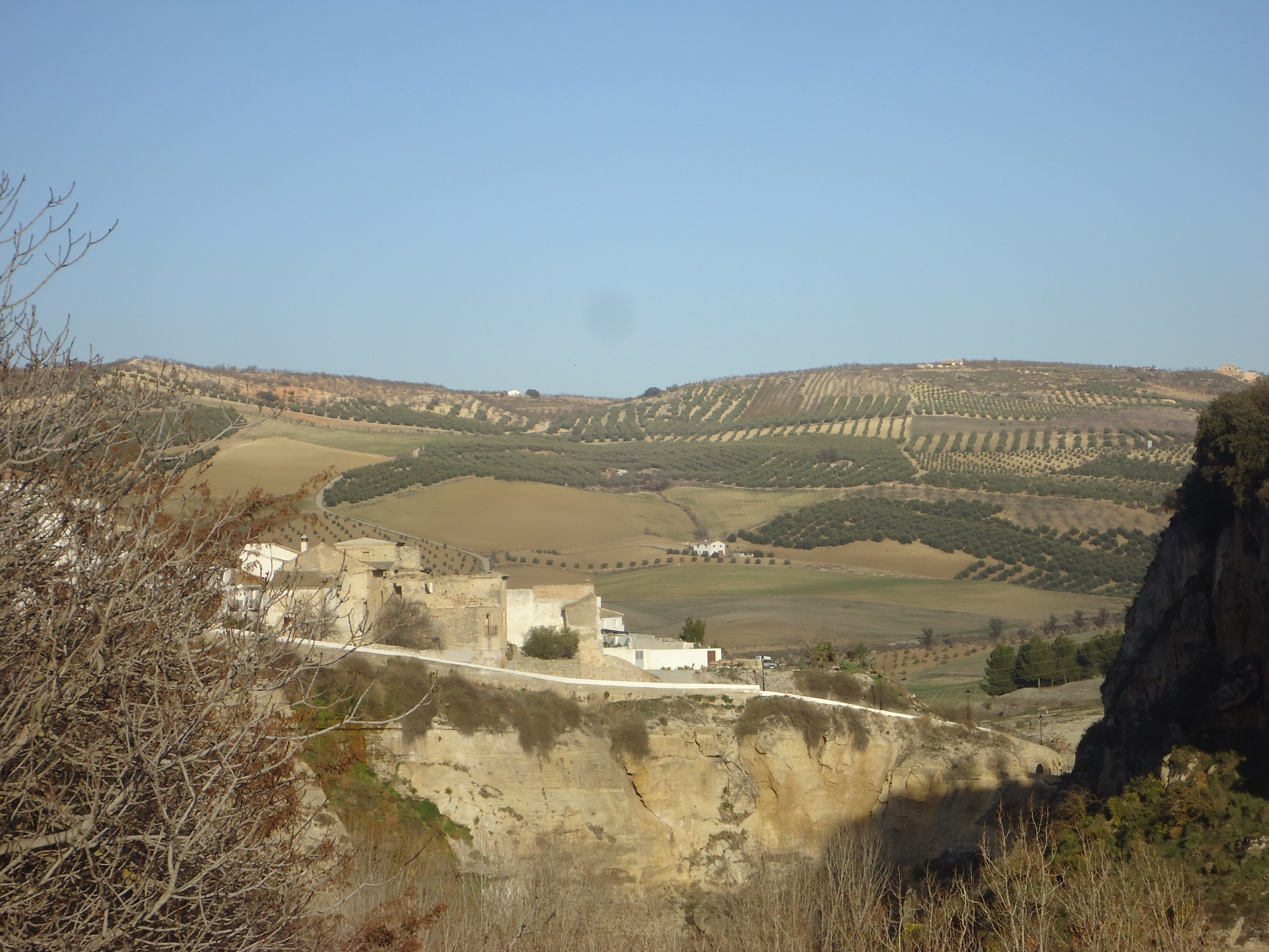 Nothing to do with the 'quake'...just a nice picture of an olive studded hillside!