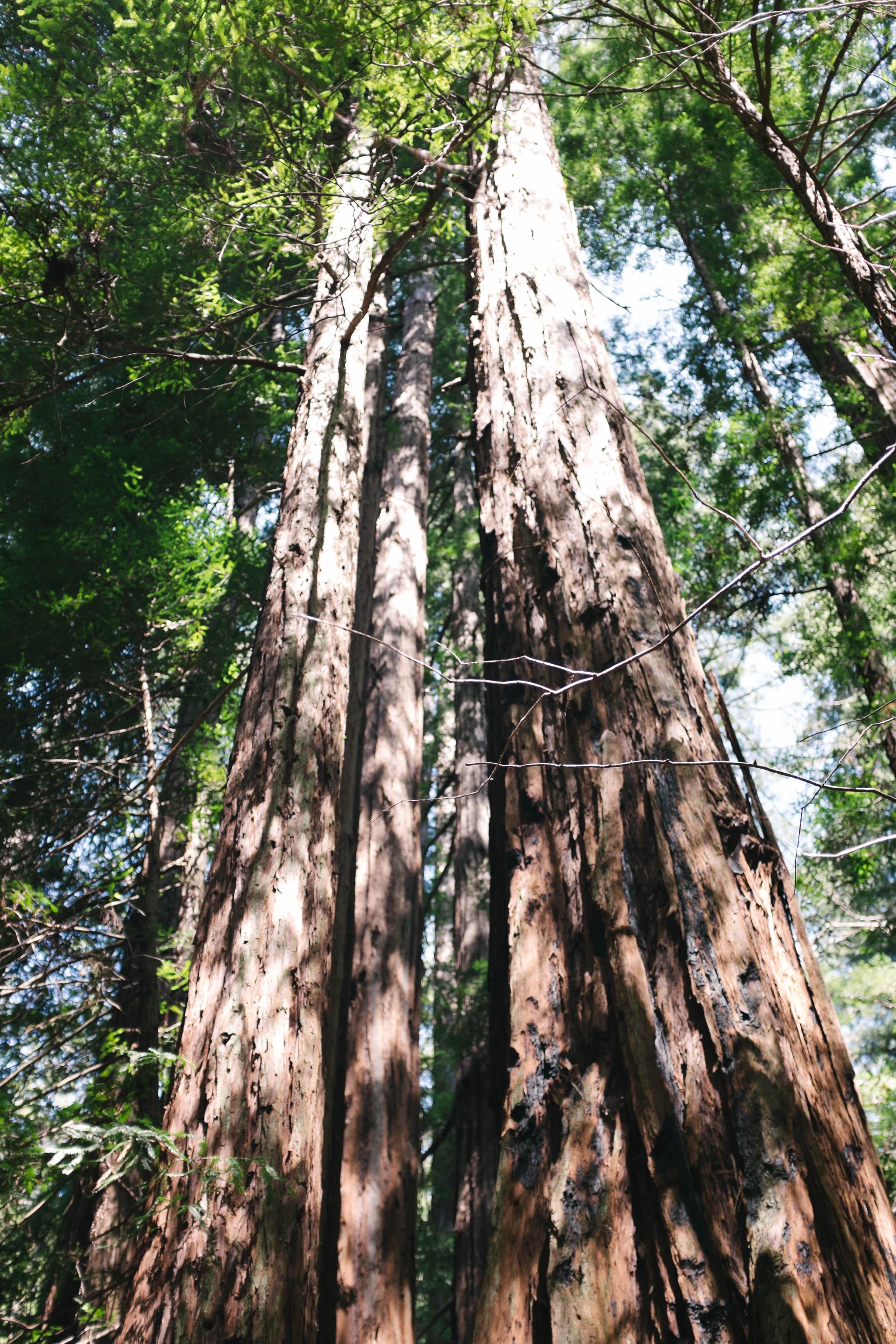 Hendy Woods Scout Folks Web-34.jpg