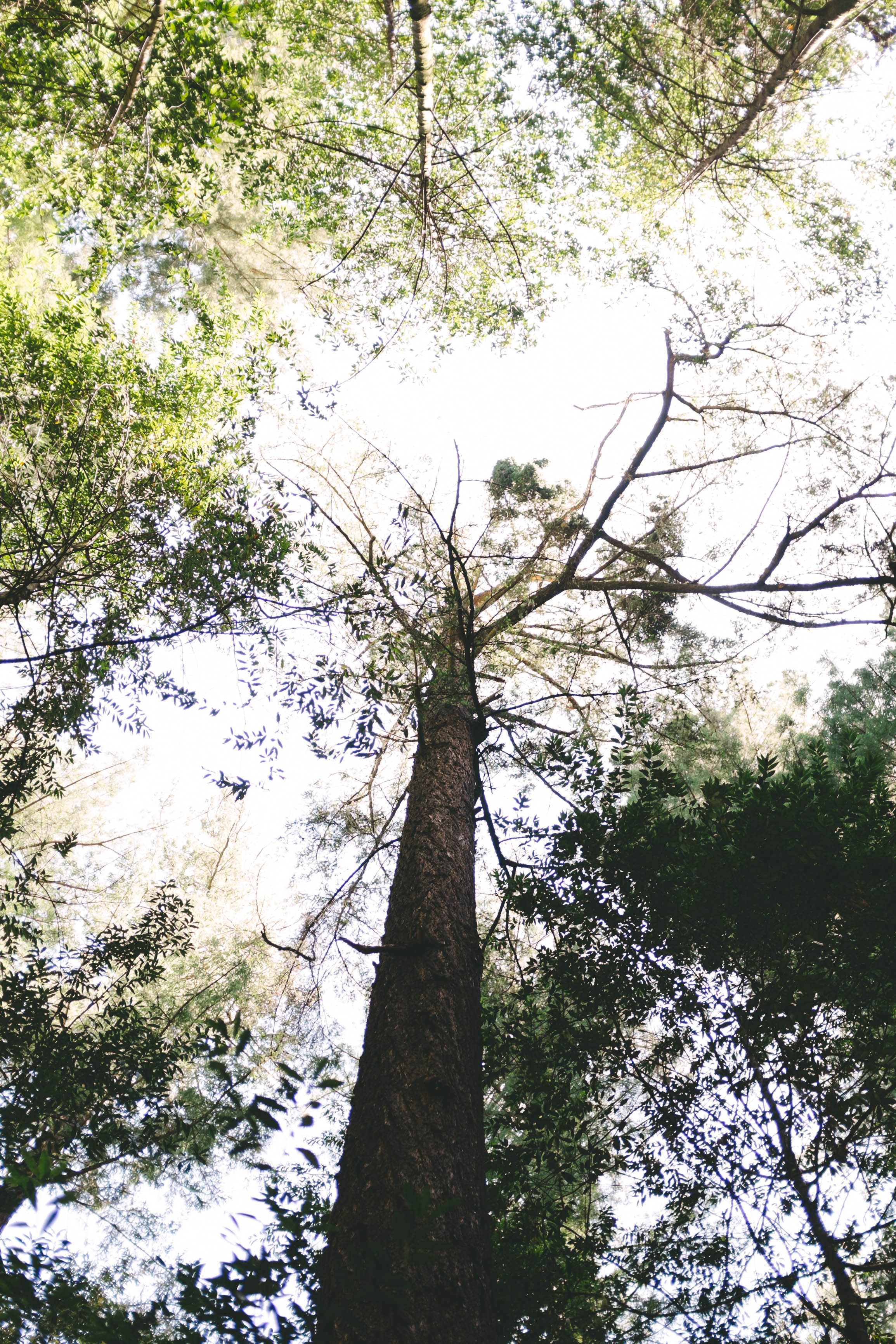 Hendy Woods Scout Folks Web-33.jpg