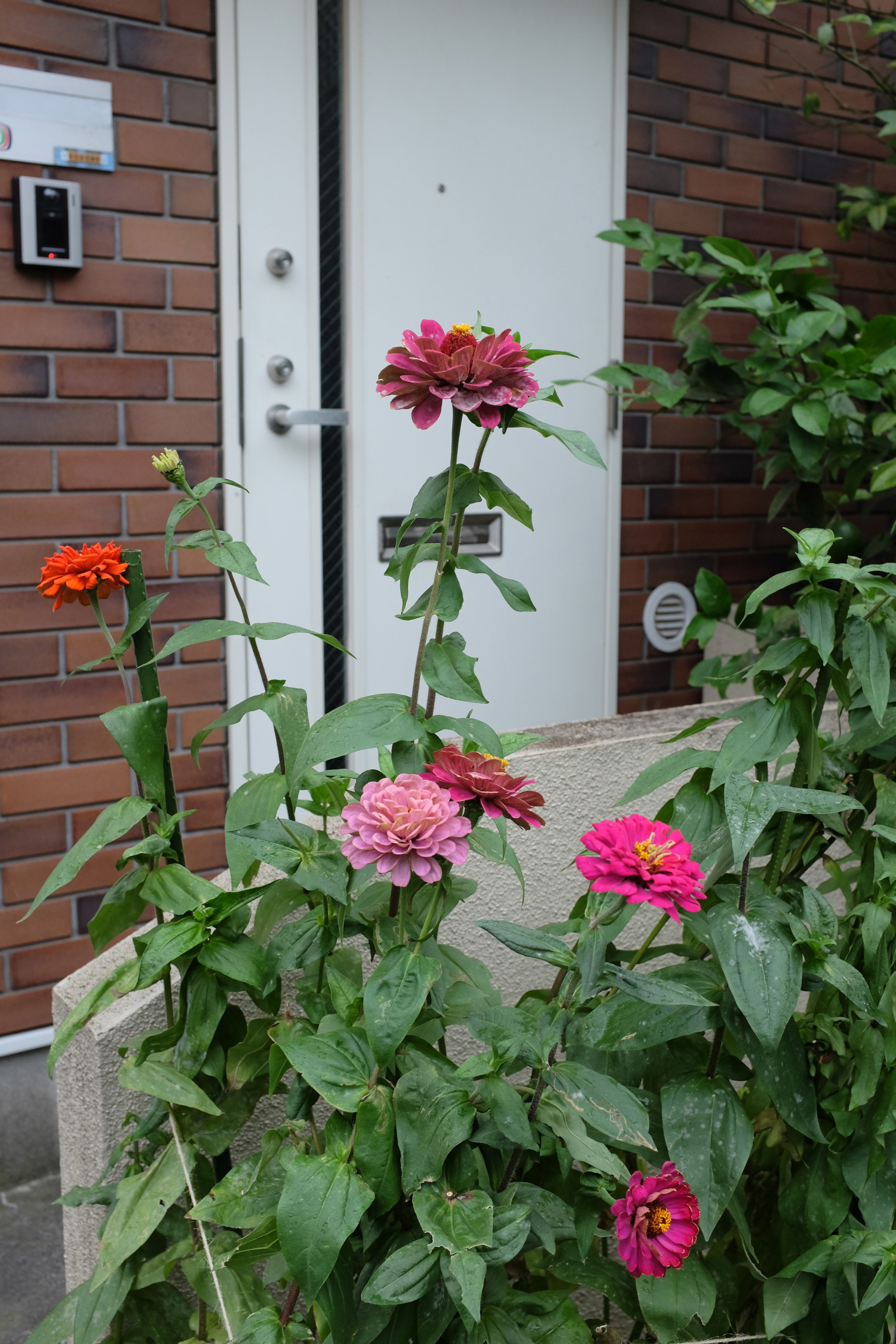 Flowers on the doorstep