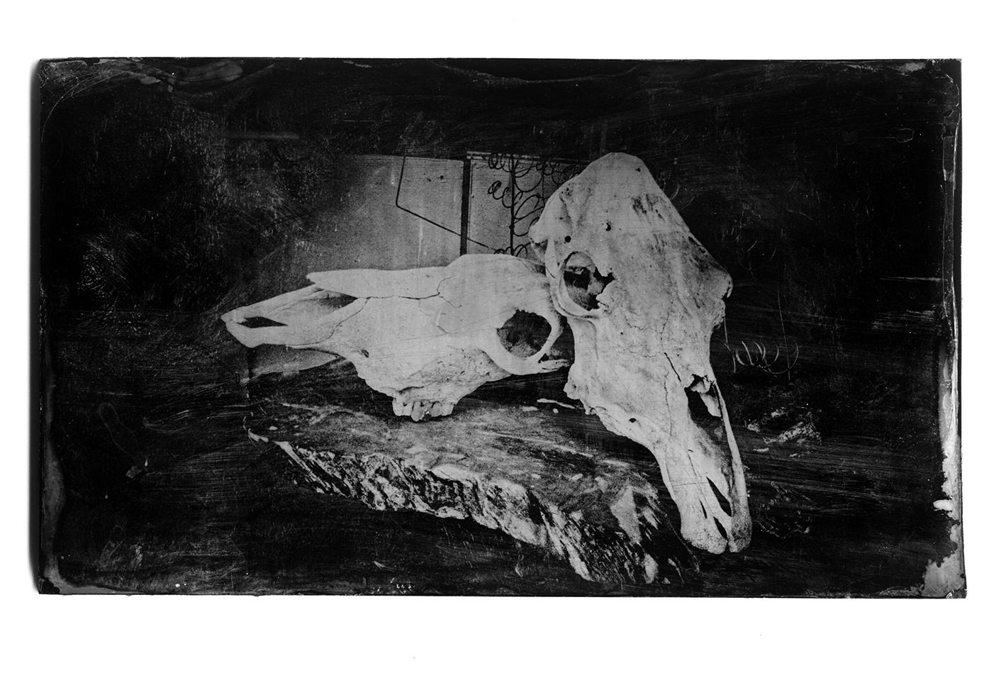 Two_skulls_black_glass.jpg
